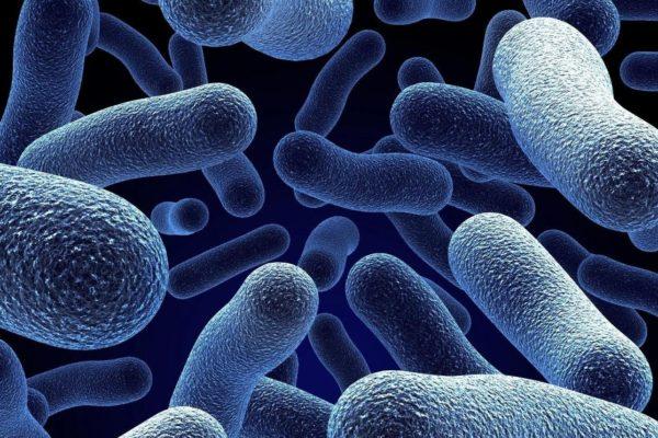 Антибактериальный эффект масла черного тмина